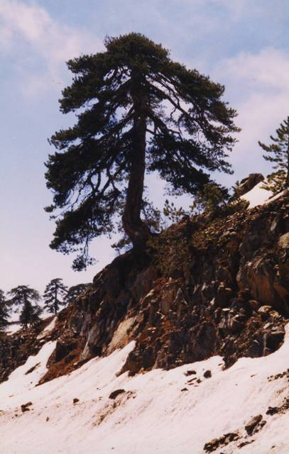 chypre-troodos-neige.1296496529.JPG