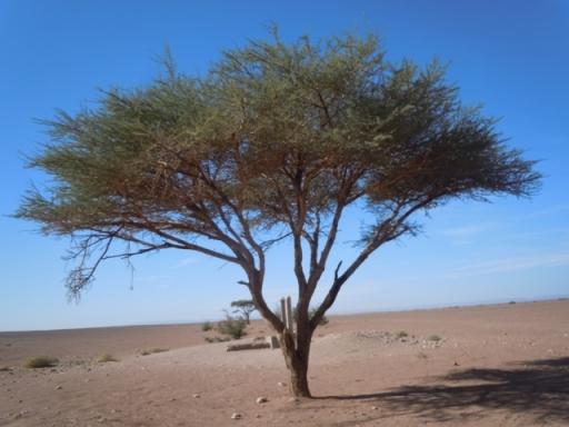 un acacia, un puits...bel endroit pour un piquenique!