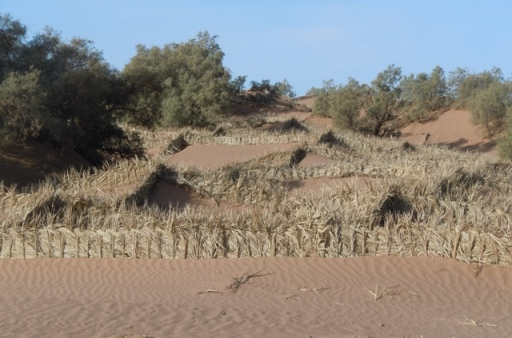 Des barrières contre l'avancée des dunes