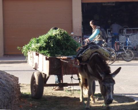 âne et verdure à Taroudant