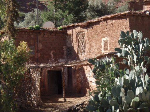 Vieille maison et opunce