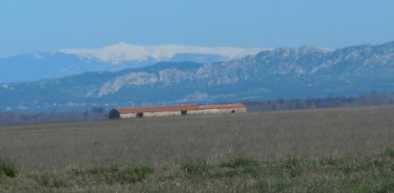 Derrière la Crau, les Alpilles et au fond la neige du Ventoux