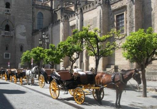 les calèches aux abords de la cathédrale