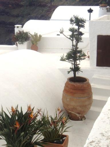 strelitzia et plantes grasses