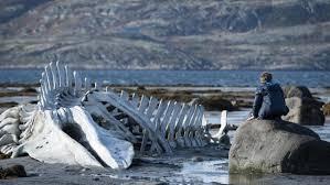 leviathan baleine