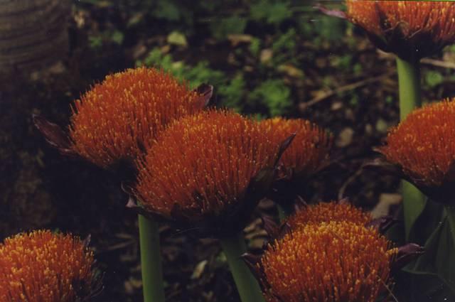 jardin botanique de puerto dela 0001