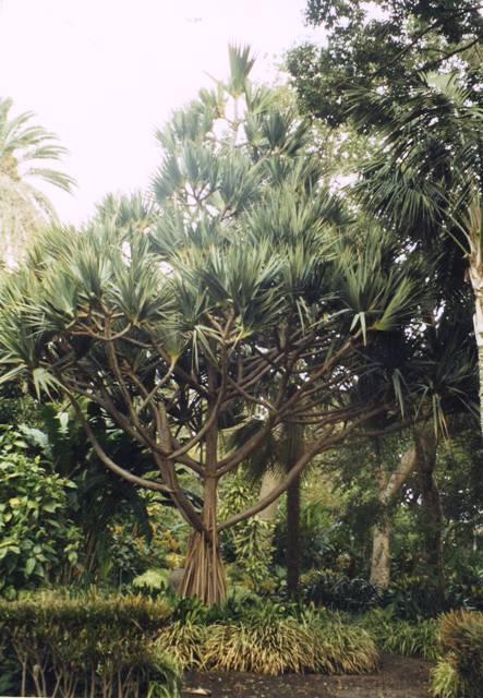 jardin botanique de puerto dela  - Copie