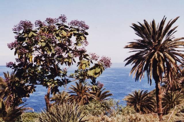 Rambla de Castro : végétation tropicale