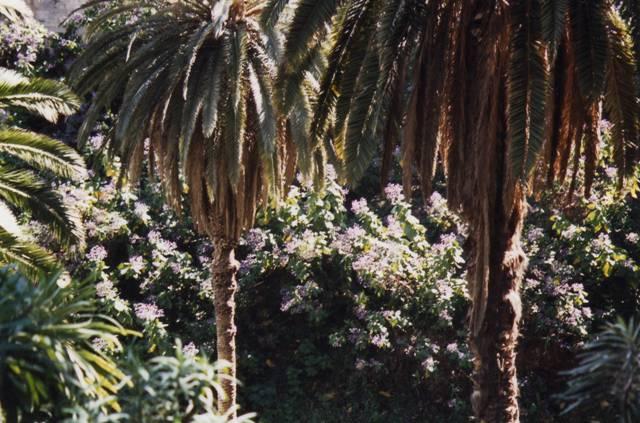 Palmiers et ambiance tropicale