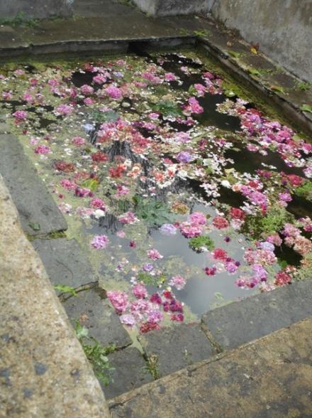 lavoir fleuri