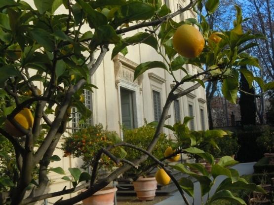 les orangers de la Farnesina