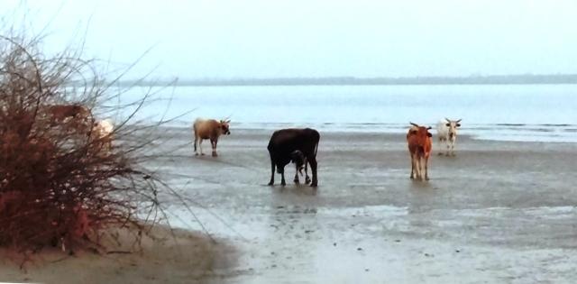 le troupeau à la pointe