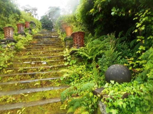 l'escalier moussu