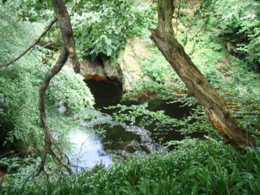 forêt maléfique